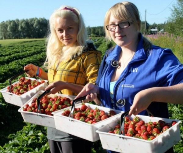 В середньому зарплата українських заробітчан у Польщі досягає 13 тис. грн.