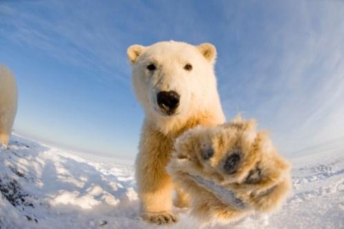 В путляндії процвітає дикунське відношення до тварин дикої природи